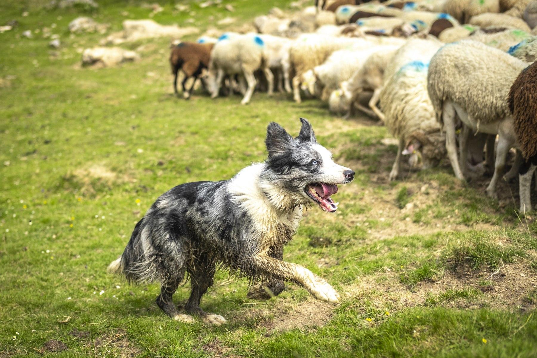 Partagez la journée d'un berger